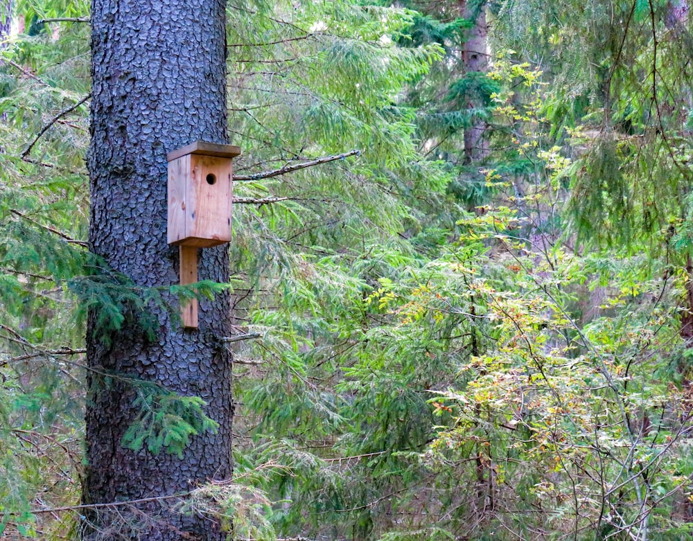 brown wooden bird house on branch of tree surrounded with tall and green trees
