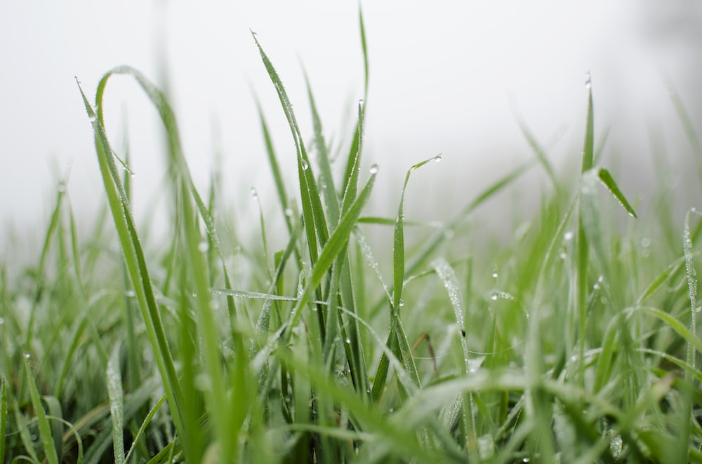 water dew ongreen grasses