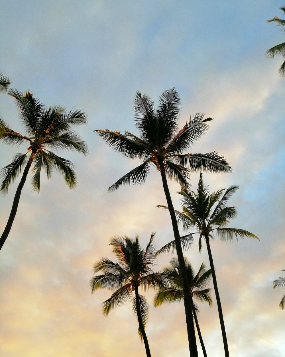 low-angle photography of coconut trees under blue and white skies