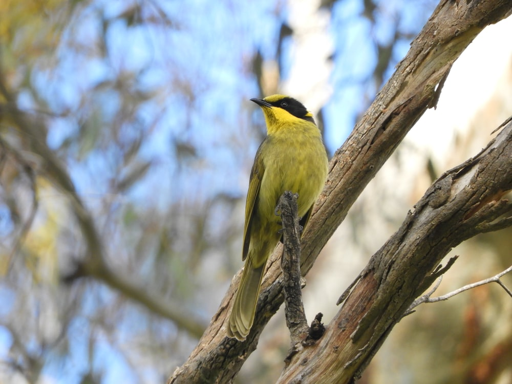 yellow and black bird perching on branch of tree during daytime \