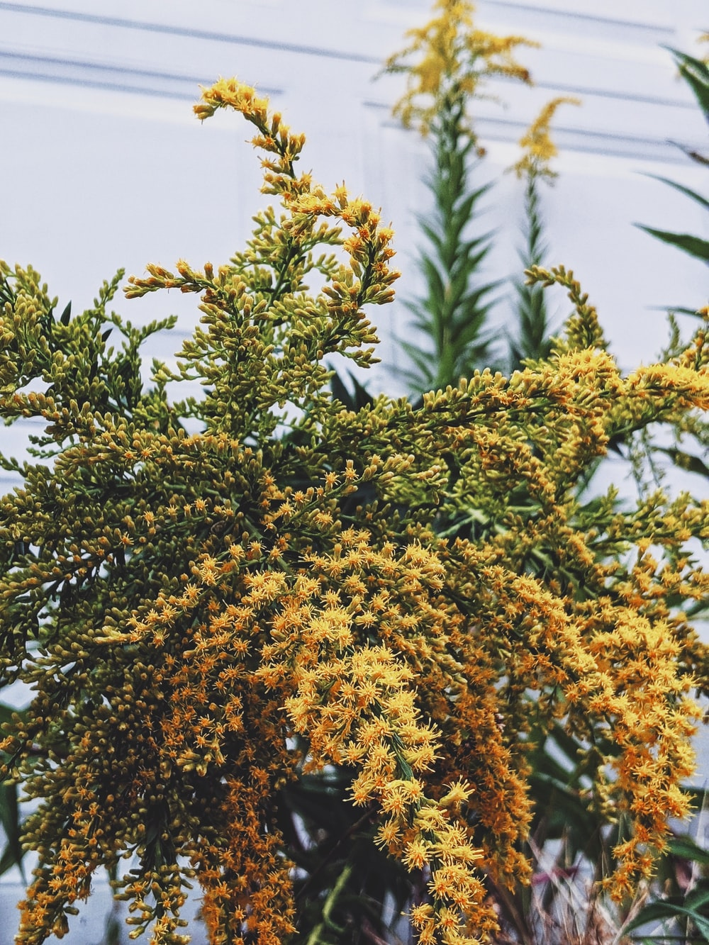 brown-leafed plant