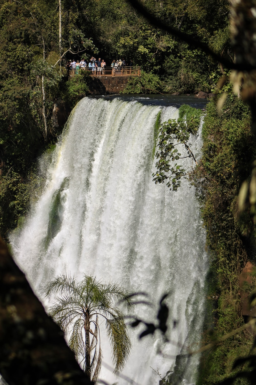 selective focus photography of waterfalls during daytime
