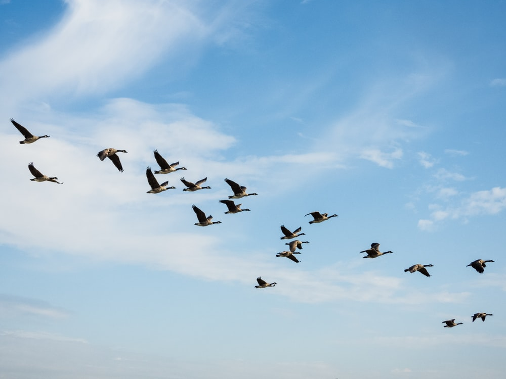birds flying during day