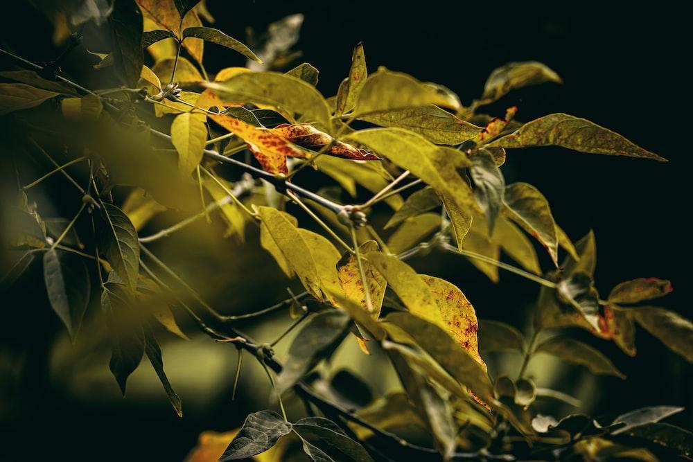 green leafead plants
