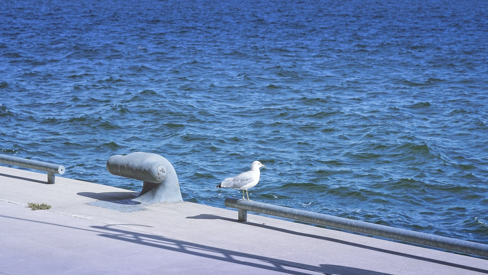 white and gray seagull standing near body of water