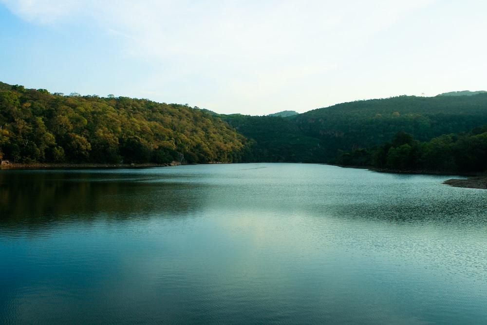 body of water near trees