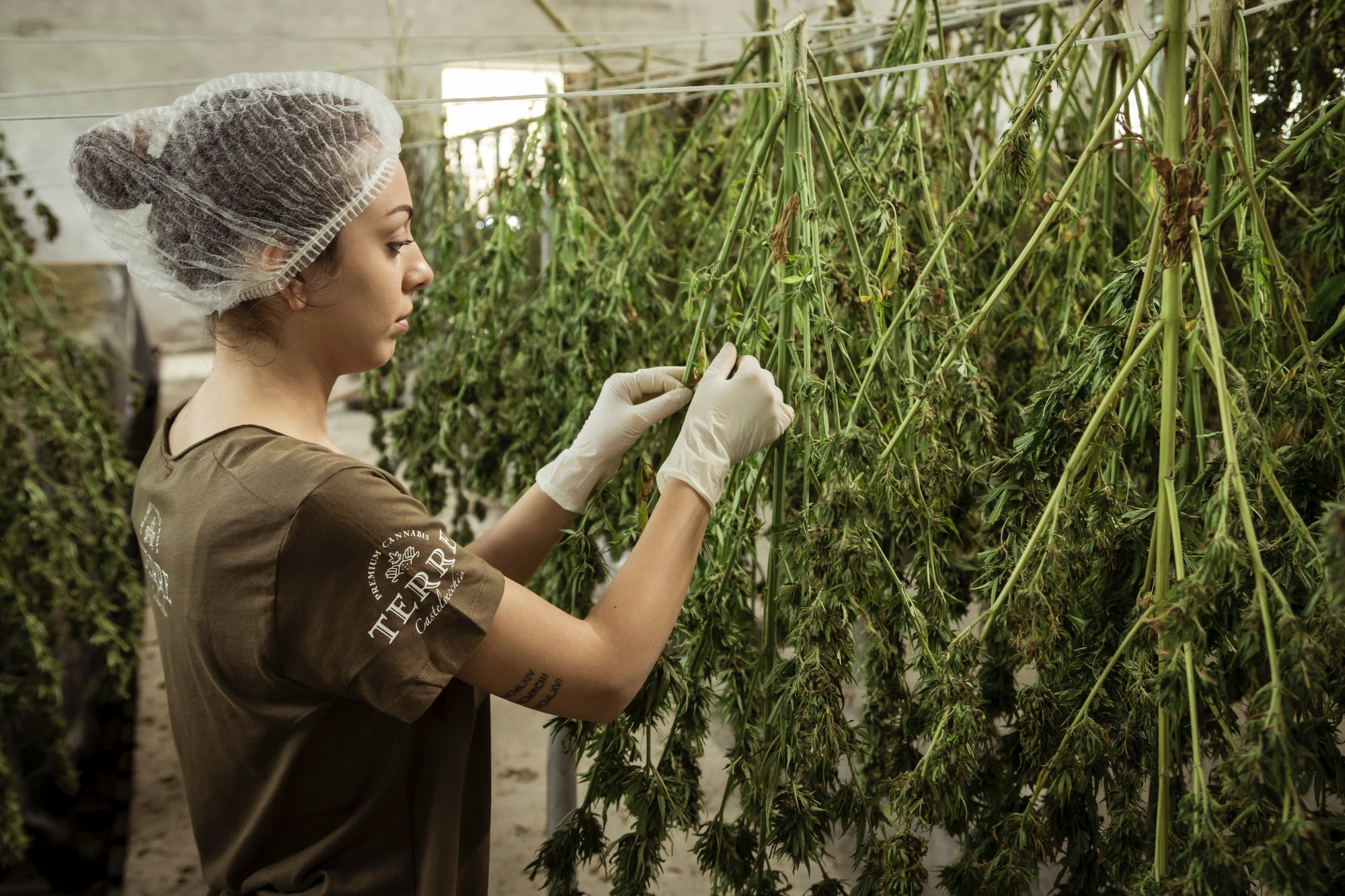 Canadian cannabis giant & Israeli medical cannabis producer want to grow together