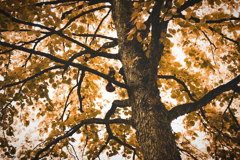 borwn tree
