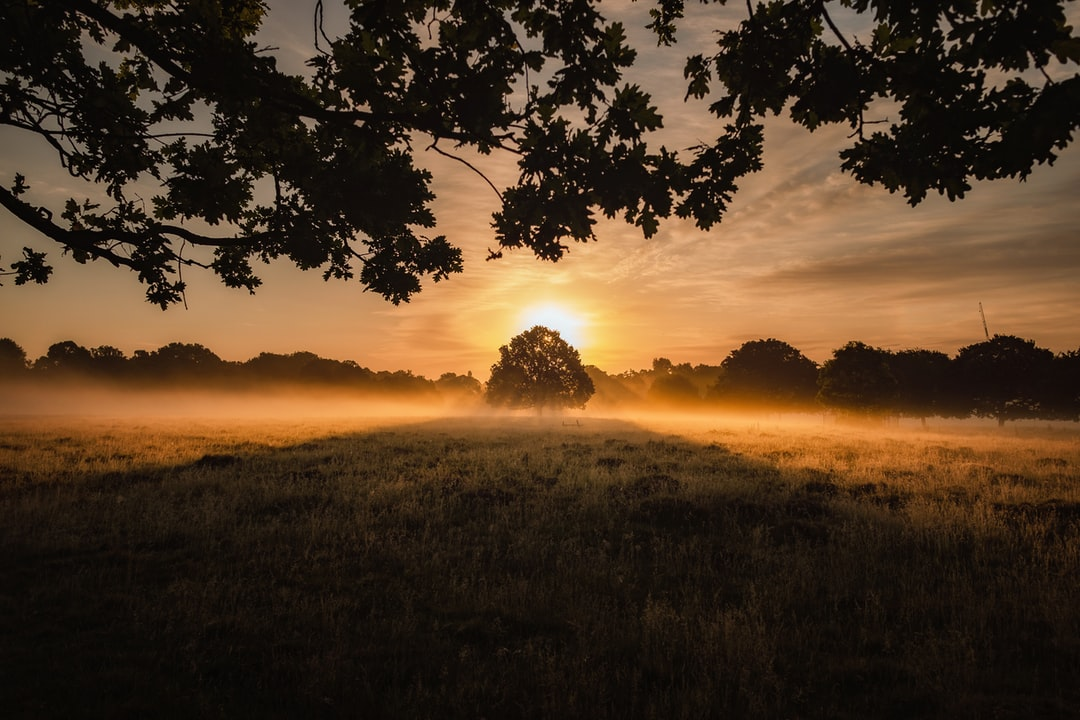 Sunrise over a lonely tree in a field, Richmond Park, London.