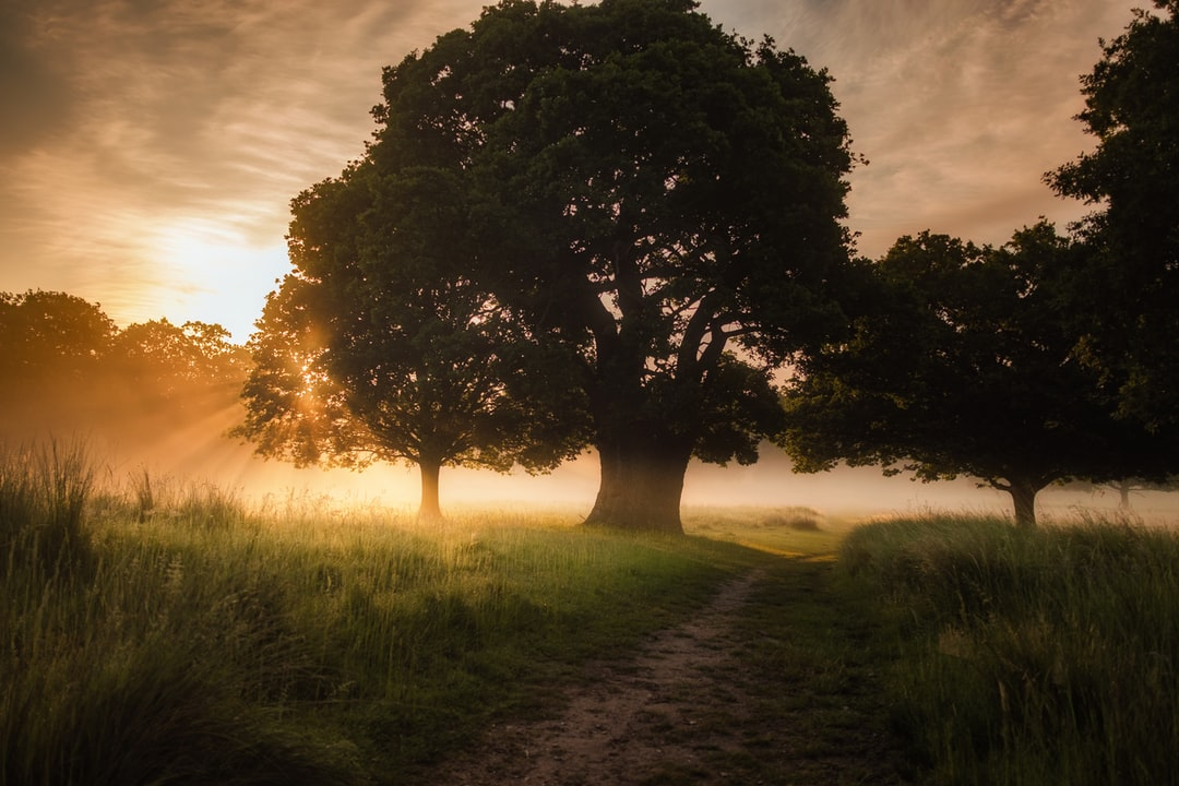 Morning sunlight breaks through the trees over a path on a misty Summer morning.