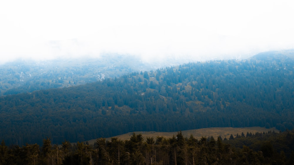 bird's eye view photography of forest trees