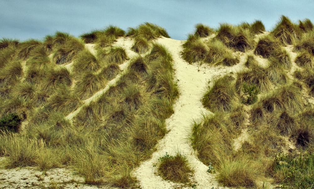 green grass and brown sand