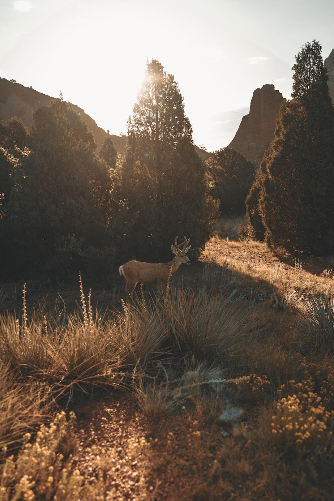 A wild deer boi chillin in Colorado