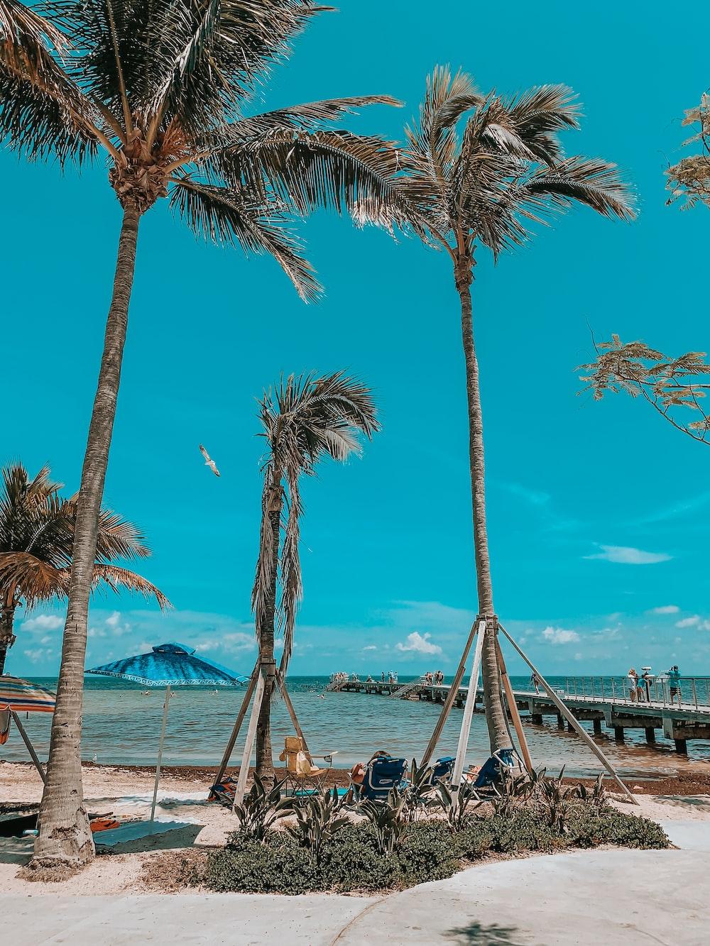 low angle photo of coconut trees beside sea