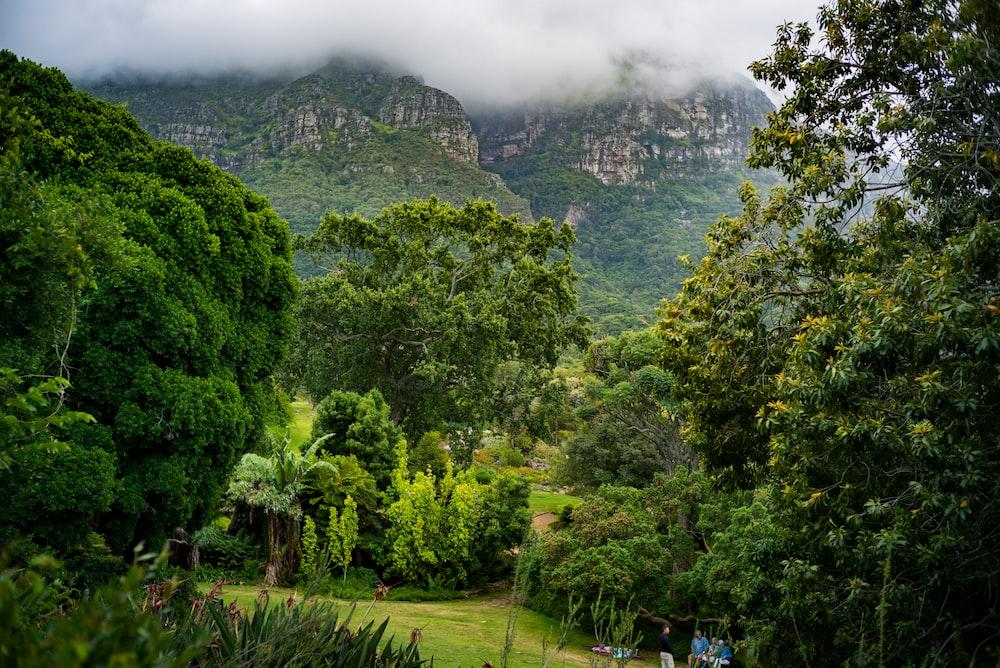 green forest across mountain