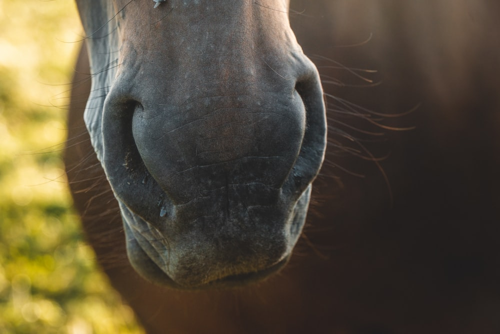 closed up photography of horse nose