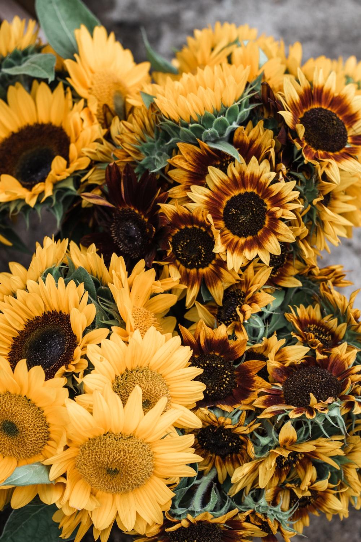 macro photography of yellow sunflowers