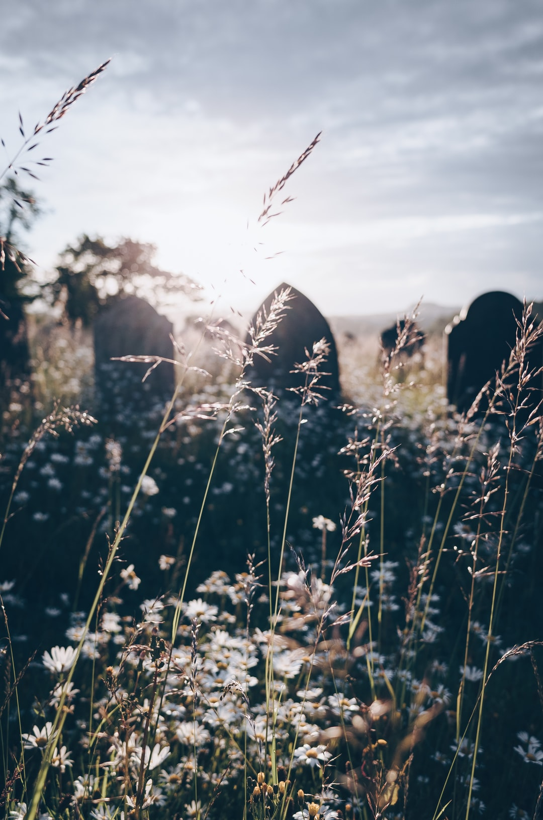 Gravestones surrounded by wildflowers and grass, glowing in the morning sunlight