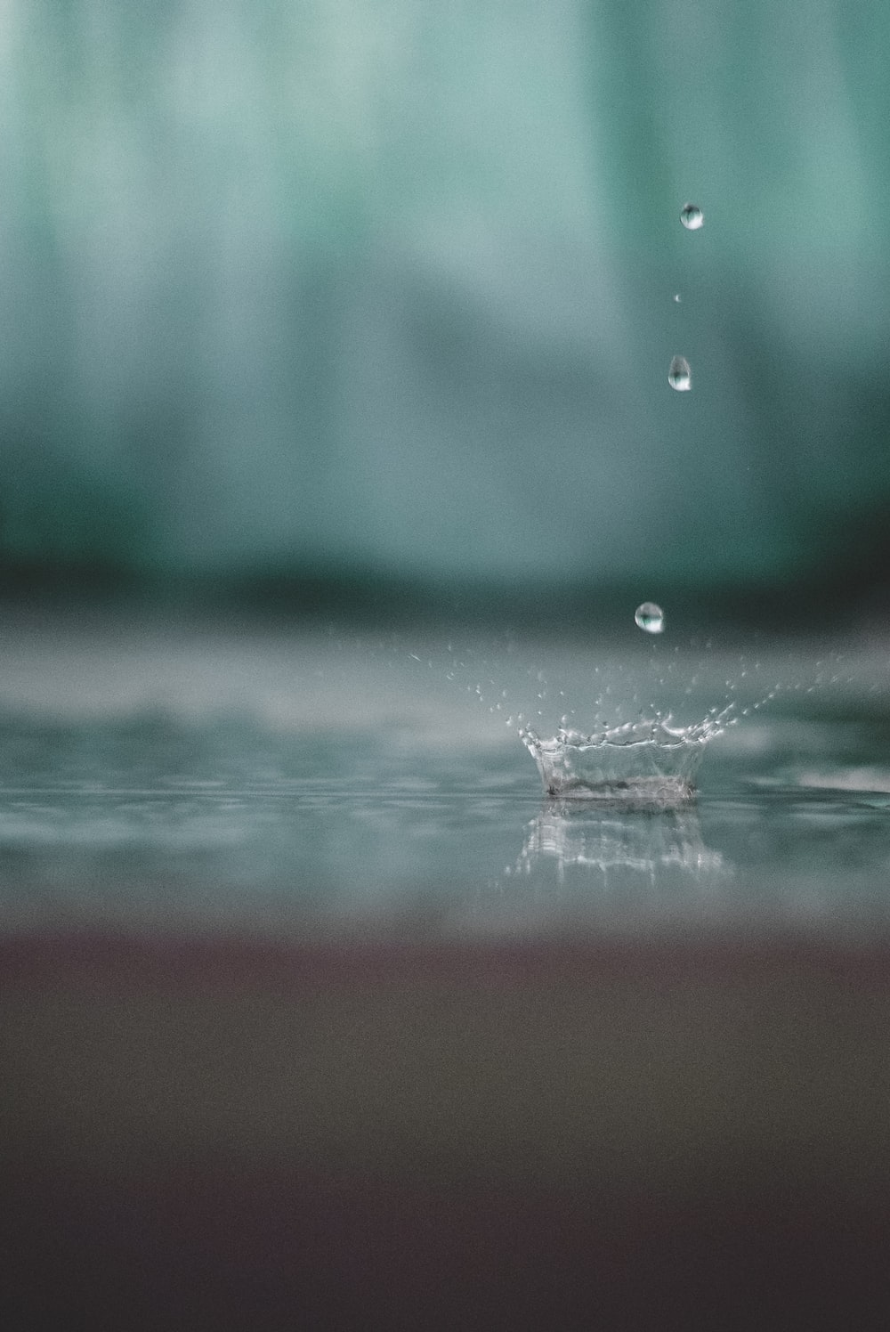 macro photography of water drops