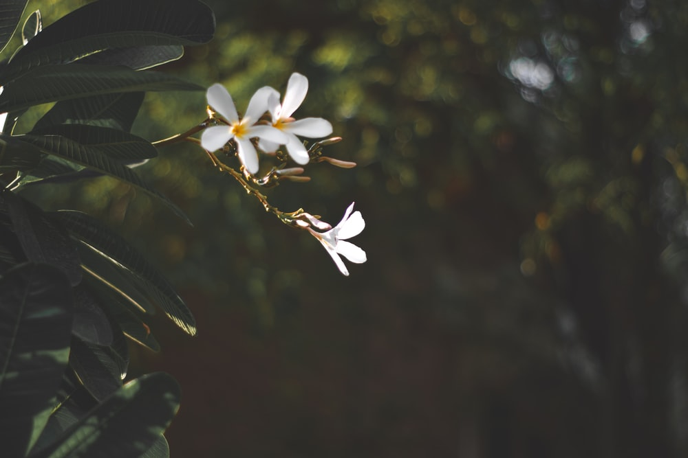 focus photography of white petaled flowers