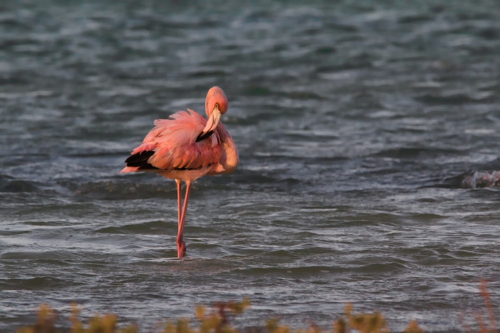 shallow focus photo of flamingo