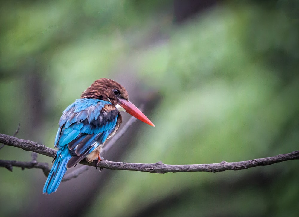 blue and brown long-beaked bird