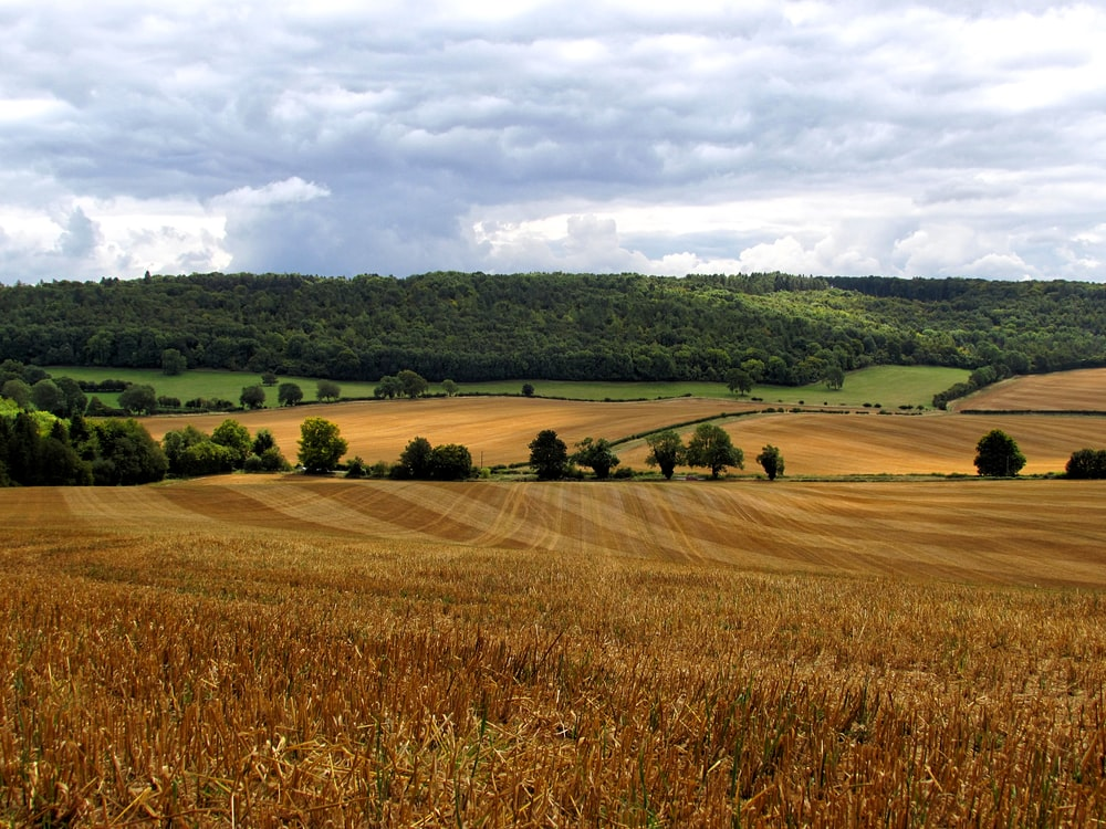 brown and green fields under cloudy sky during daytime