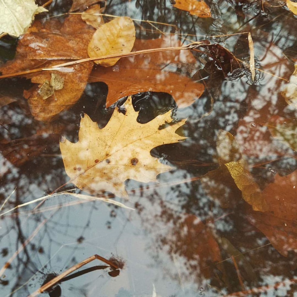 brown dried leaves in body of water