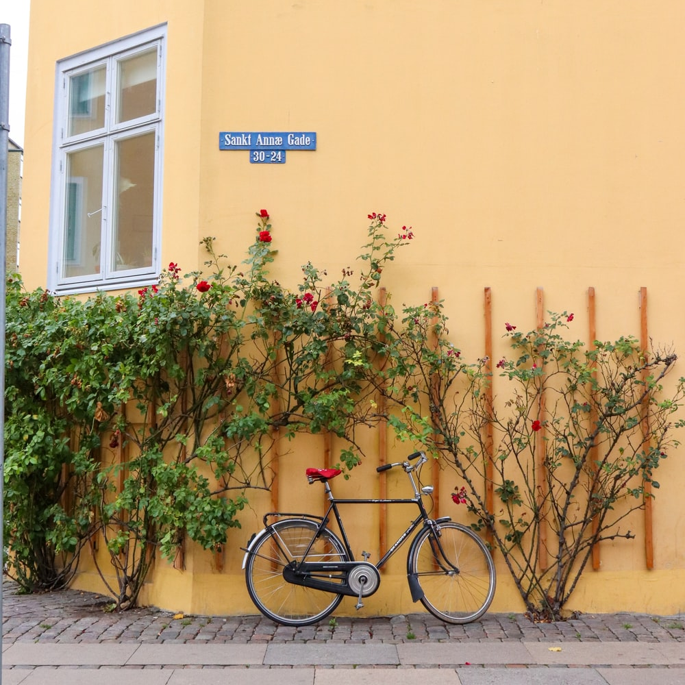 bicycled parked near plants
