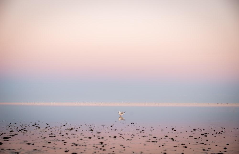 seashore across horizon