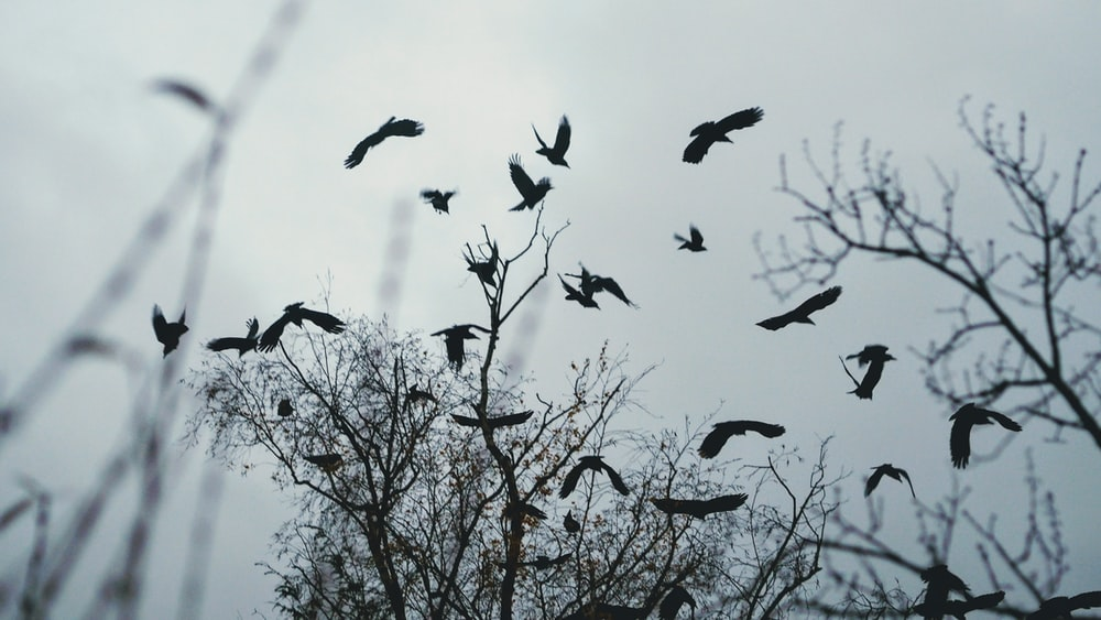 birds flying above bare tree during day