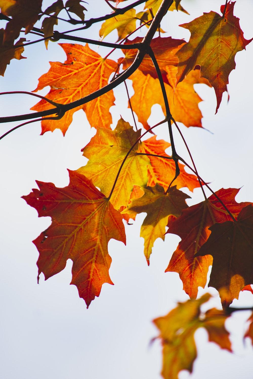 brown leaves illustration
