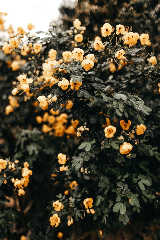 yellow bearing plants