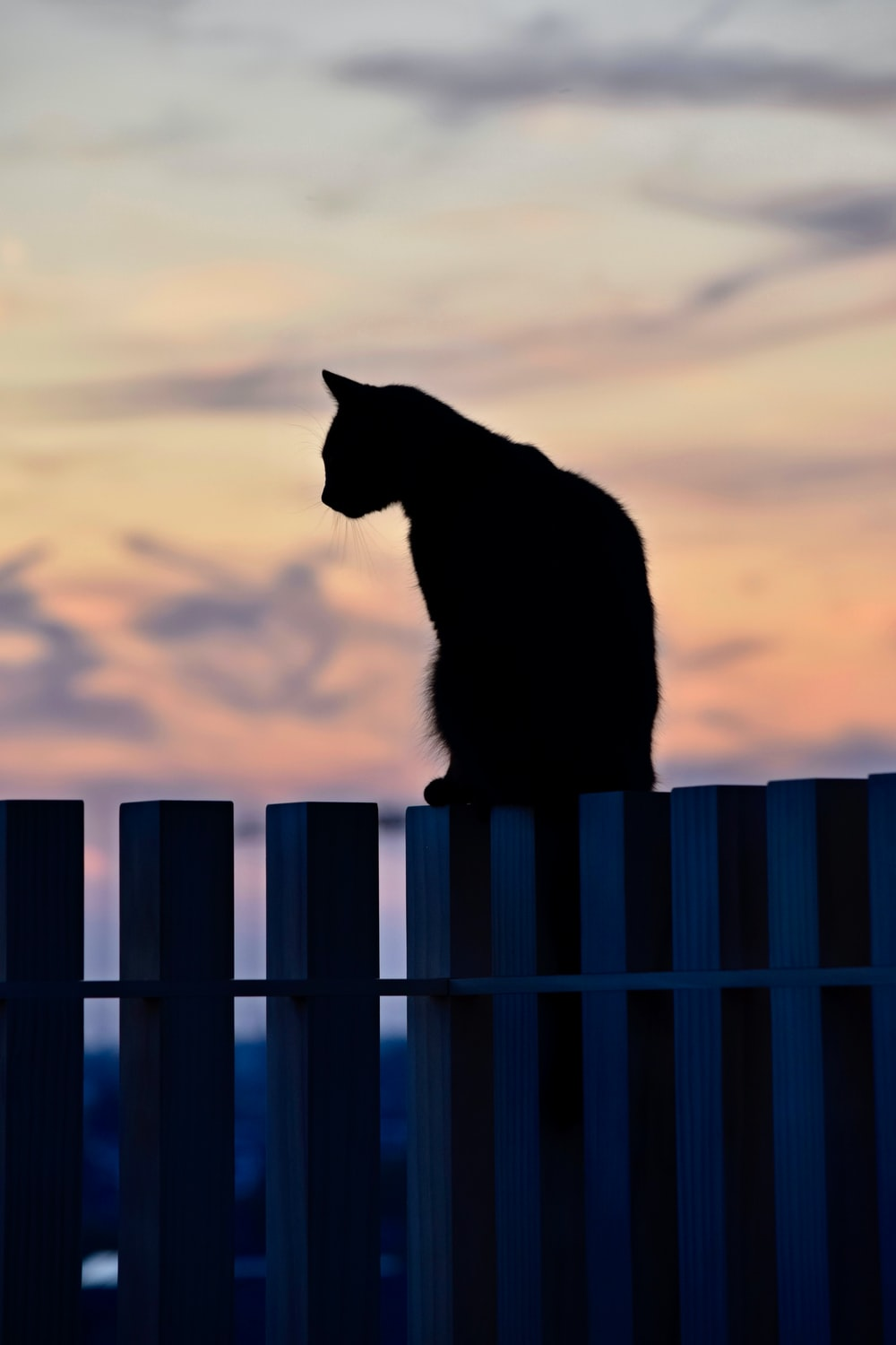 silhouette of cat on wooden fence