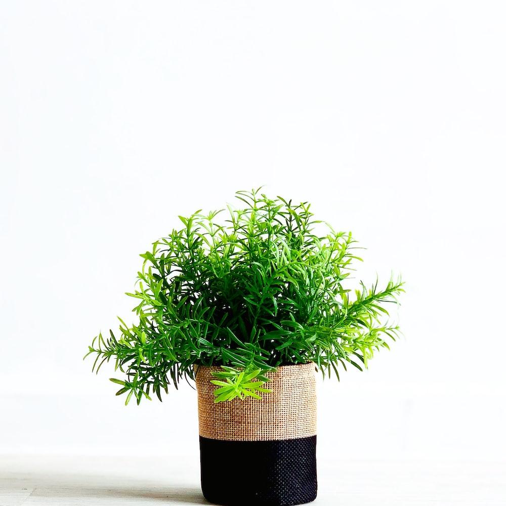 green leaf plant in black pot