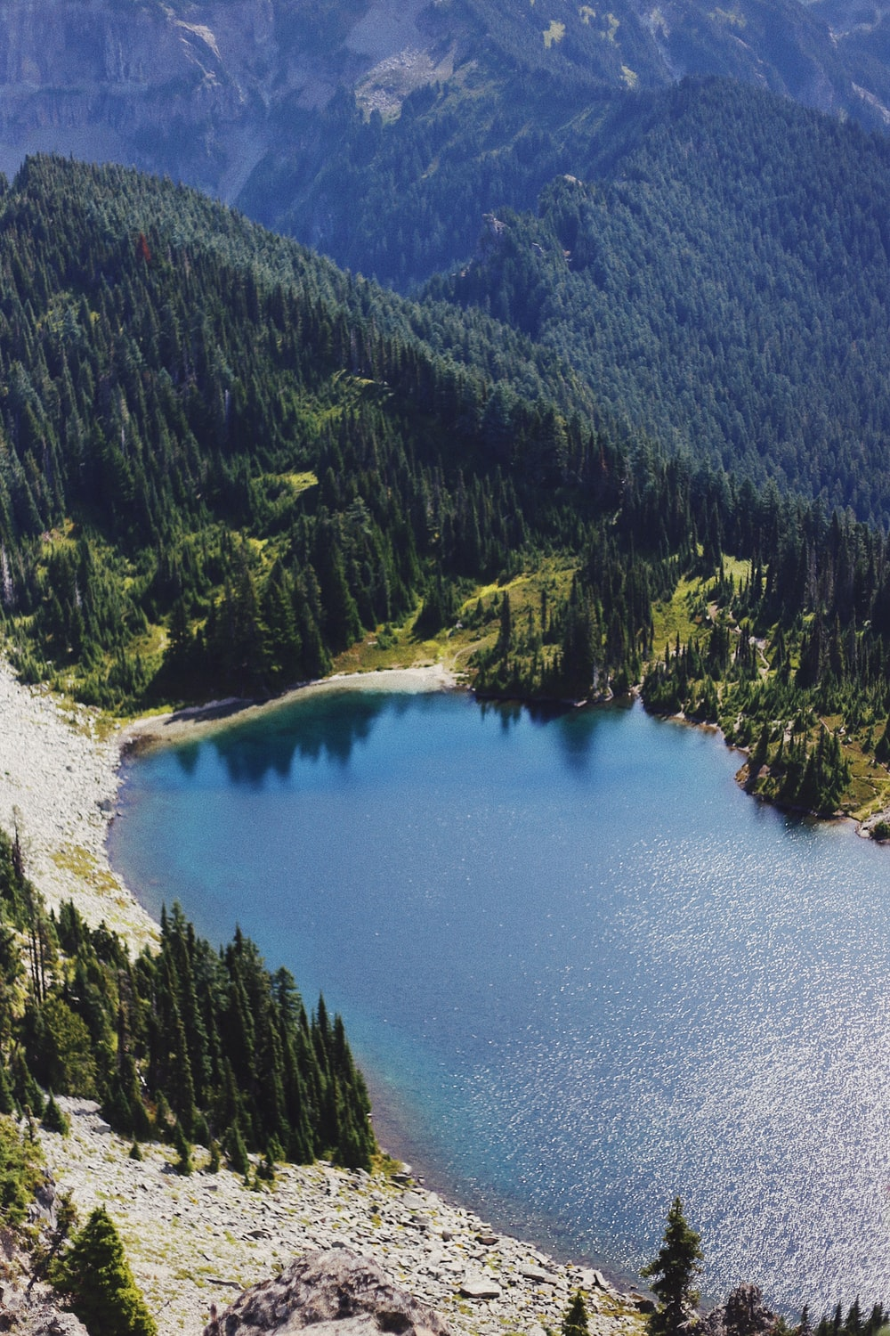 aerial view of pine trees beside body of water during daytime