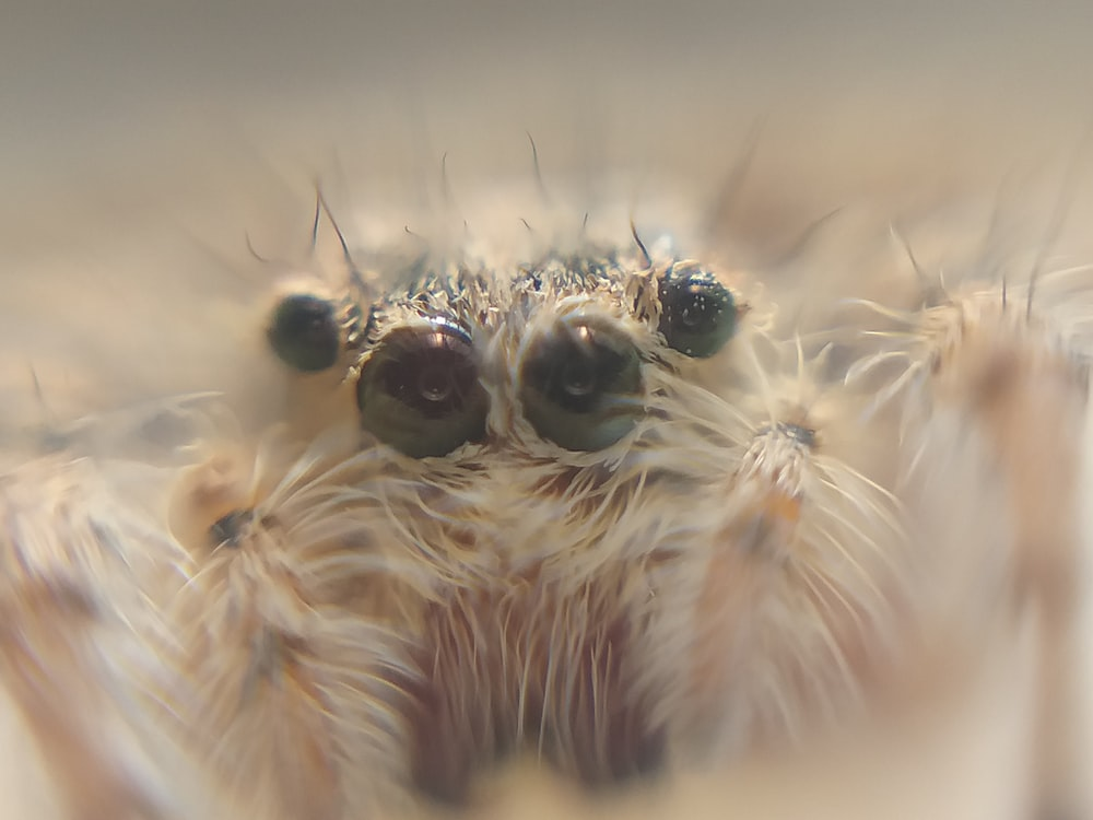 white tarantula face macro photography