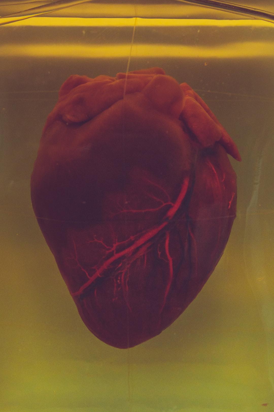 A real human heart inside a jar