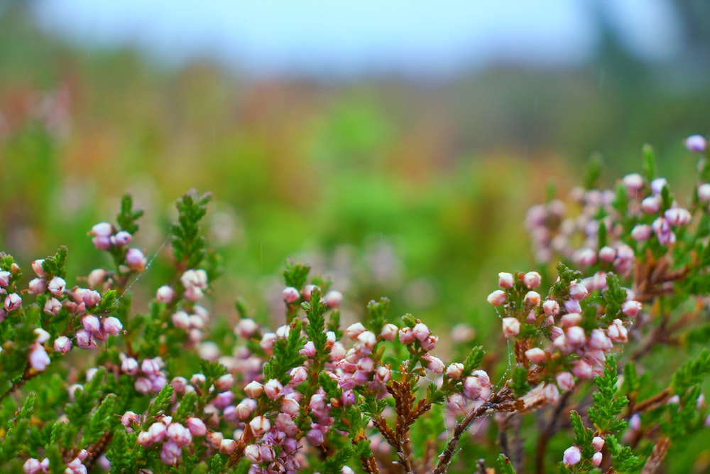 shallow focus photography of green-leafed plant with pink flowers