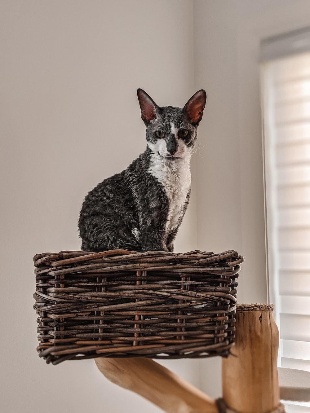 gray cat on wicker rack