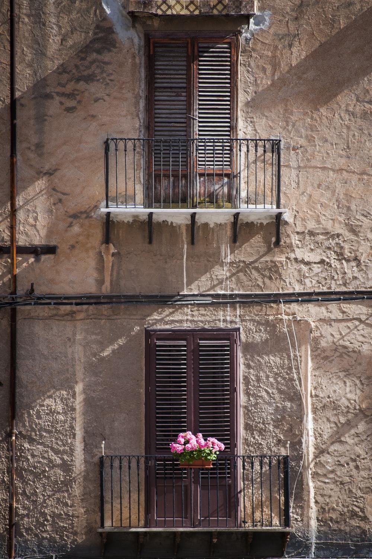 pink petaled flower on balustrade