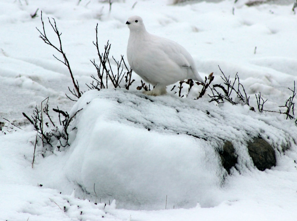 white bird perching on snow covered rock