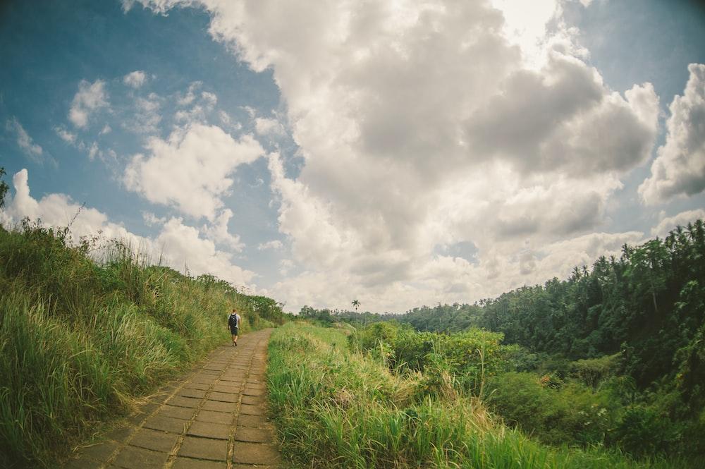 person walking on pathway during daytime