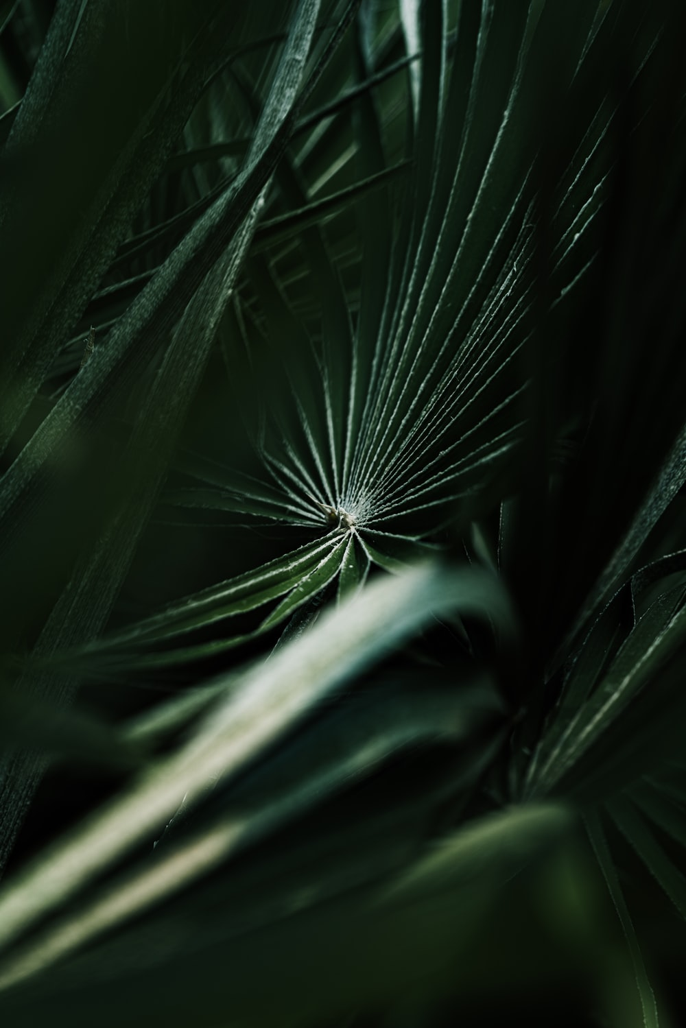 selective focus photography of green fan plant