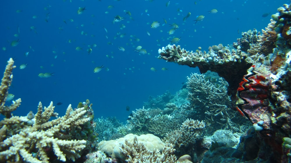 shoal of fish swimming under water above corals