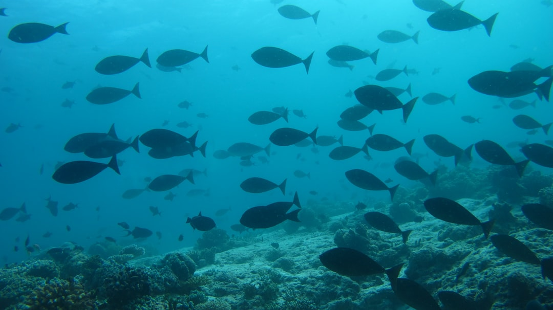 groupe of triggerfish