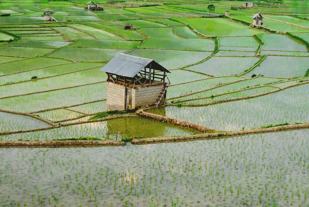 Rice field, Mazandaran, IRAN