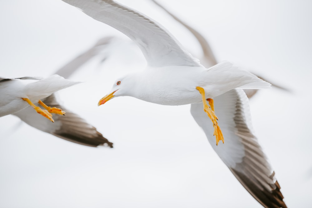 two white birds on mid air