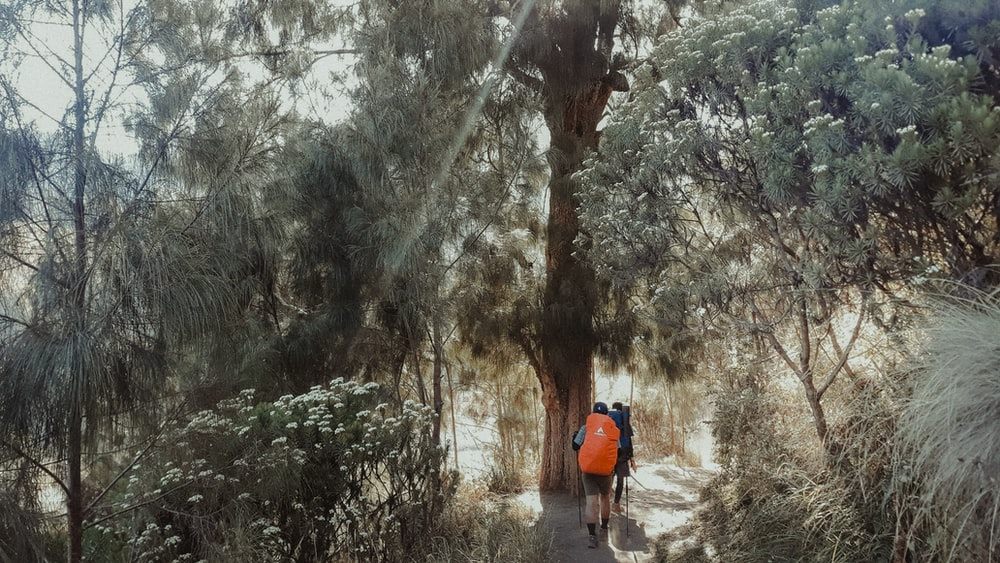 people walking beside trees