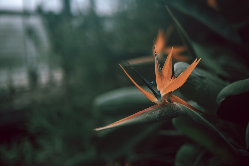 orange flower with green leaves macro photography